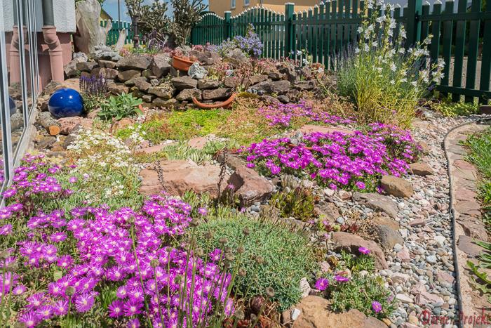 privater Garten mit trockenheitstolaranten Pflanzen