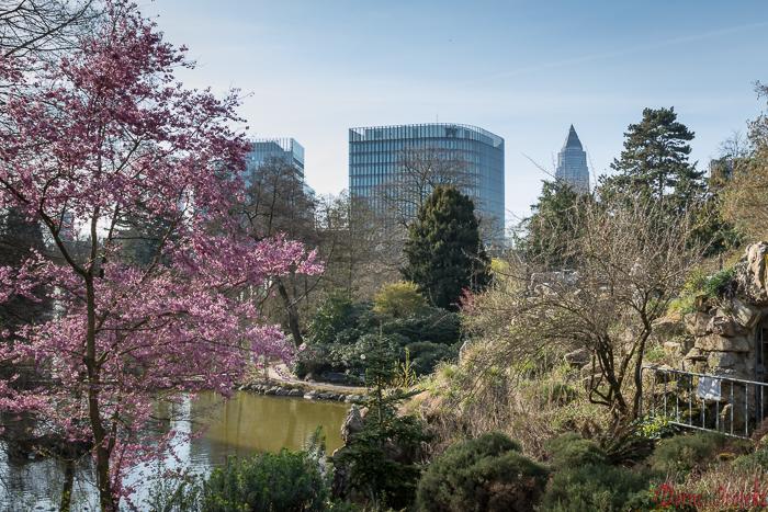 botanischer Garten mit vielen Blühpflanzen und Bäumen