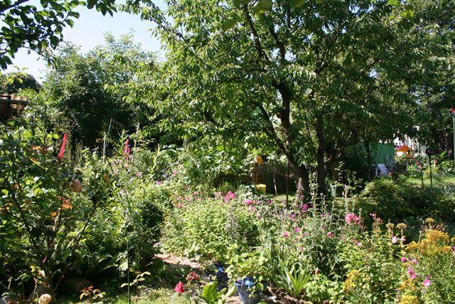 Insekten freundlicher Garten ©A. Schäffer