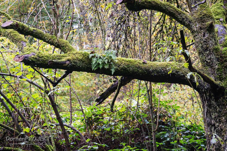 Lebensgemeinschaft Baum ©DornenProjekt