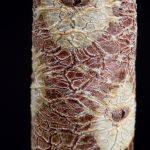 Echeveria procera Stamm ©DornenProjekt