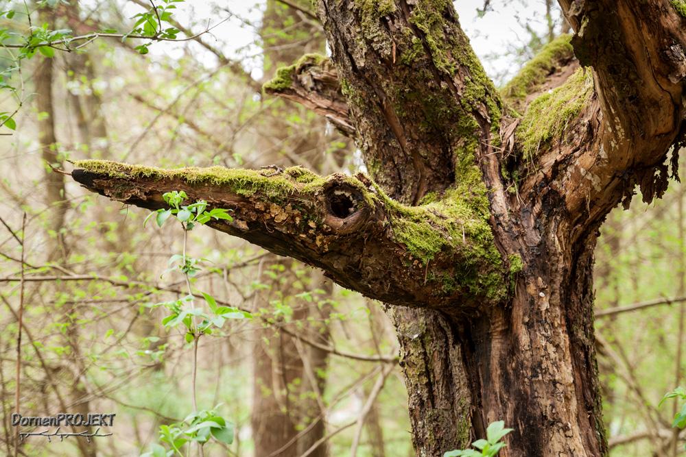 Stehendes Totholz ©DornenProjekt (Wunderwelt Totholz)