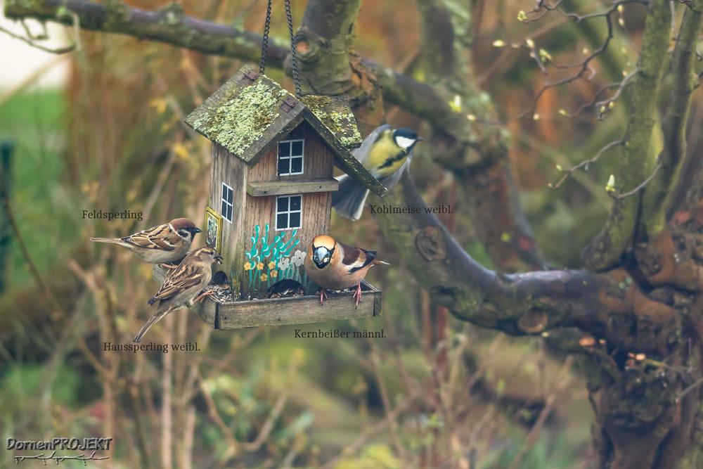 verschiedene Vögel am Futterhaus ©DornenProjekt (Heimische Vögel ganz nah 111 häufigste Arten)