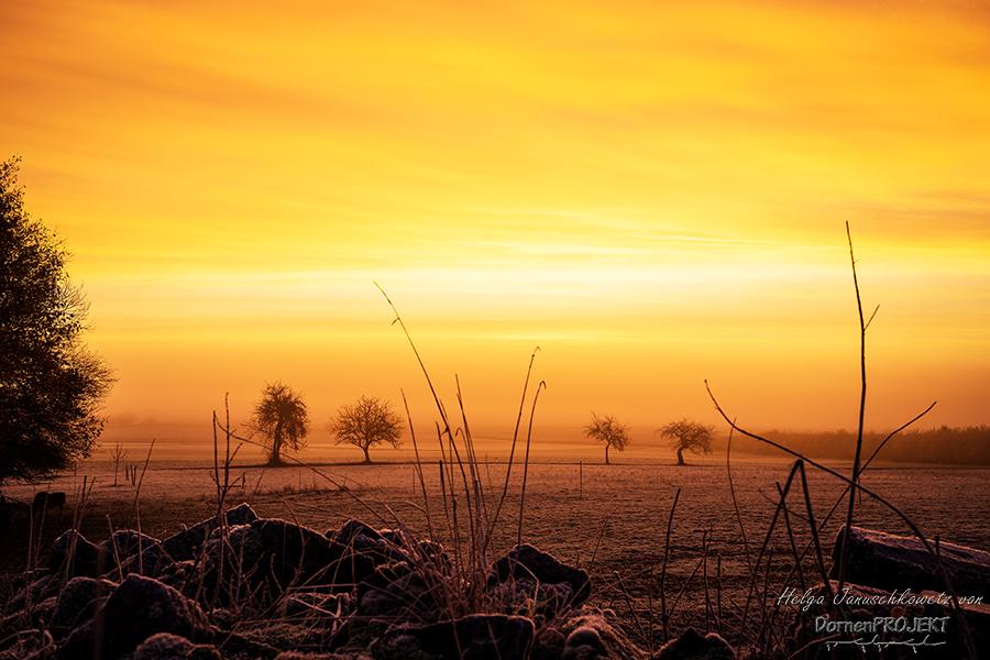 Goldene Stunde ©DornenProjekt